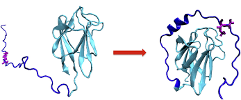 relación macromolecular